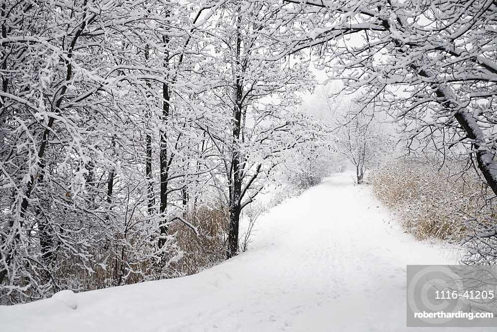 A Path Lined With Trees And Covered In Snow, Quebec, Canada