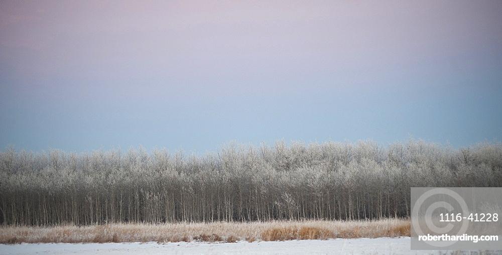 Winnipeg, Manitoba, Canada, A Landscape In Winter