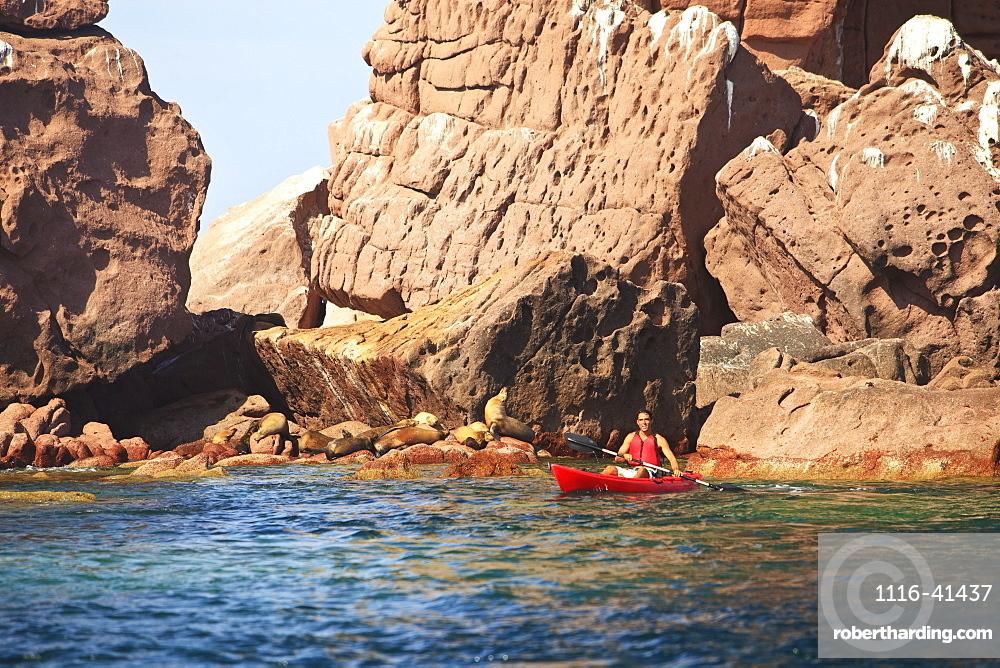 A Tourist Paddles In A Red Boat At Los Islotes National Marine Park Espiritu Santo Island, La Paz Baja California Mexico