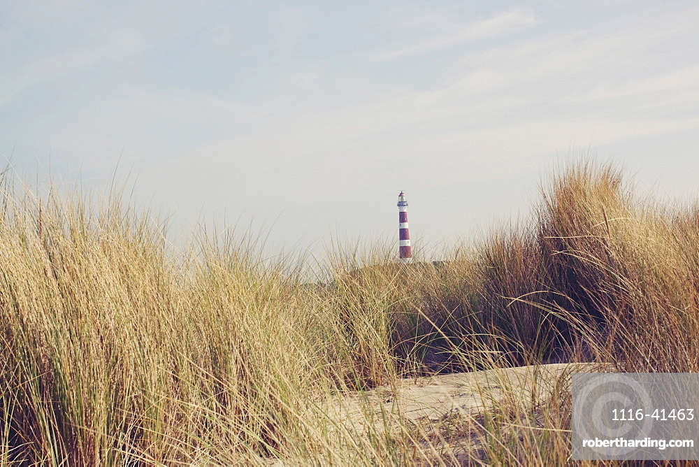 A Lighthouse Past The Reeds On The Beach, Ameland, The Netherlands
