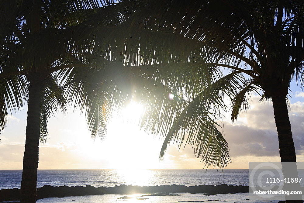 Sunlight reflecting off the water and two palm trees at the water's edge, Honolulu hawaii united states of america