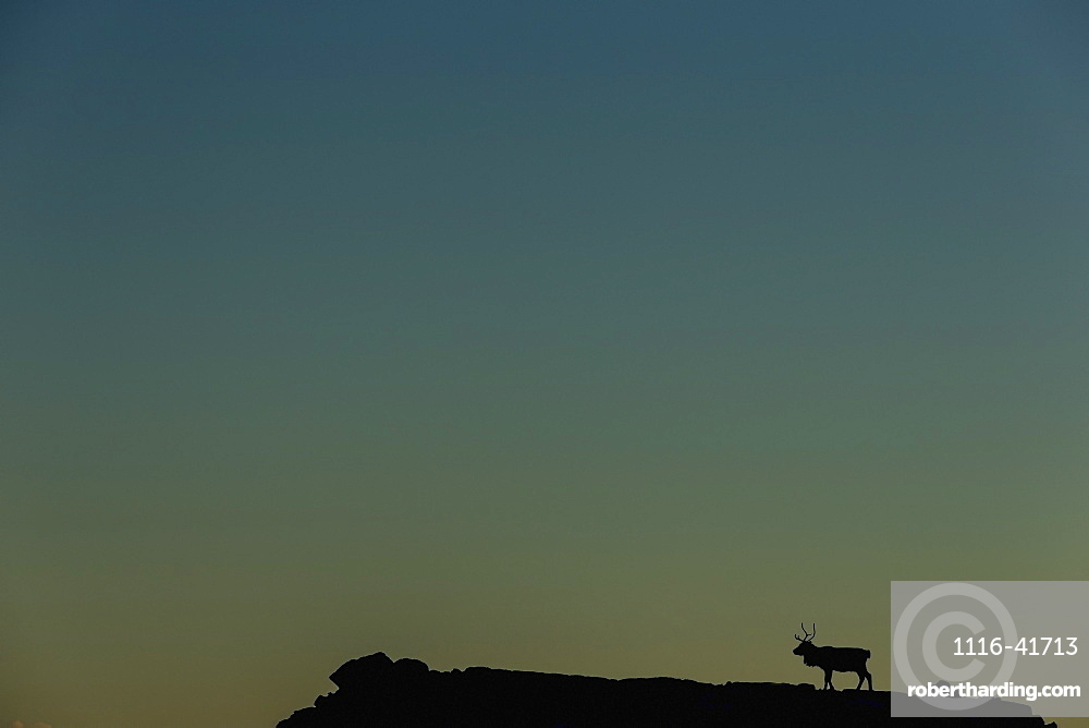 Silhouette Of A Solitary Reindeer Standing On A Rock At Sunset, Eastern Iceland
