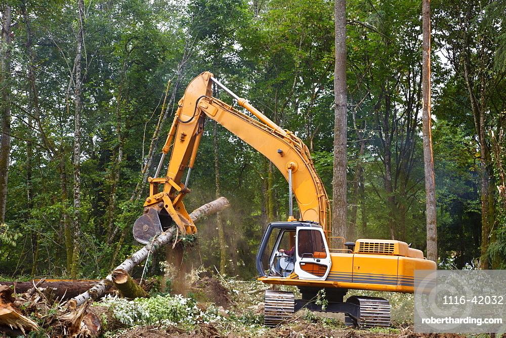 A Backhoe Moves Cut Trees, Portland, Oregon, United States of America