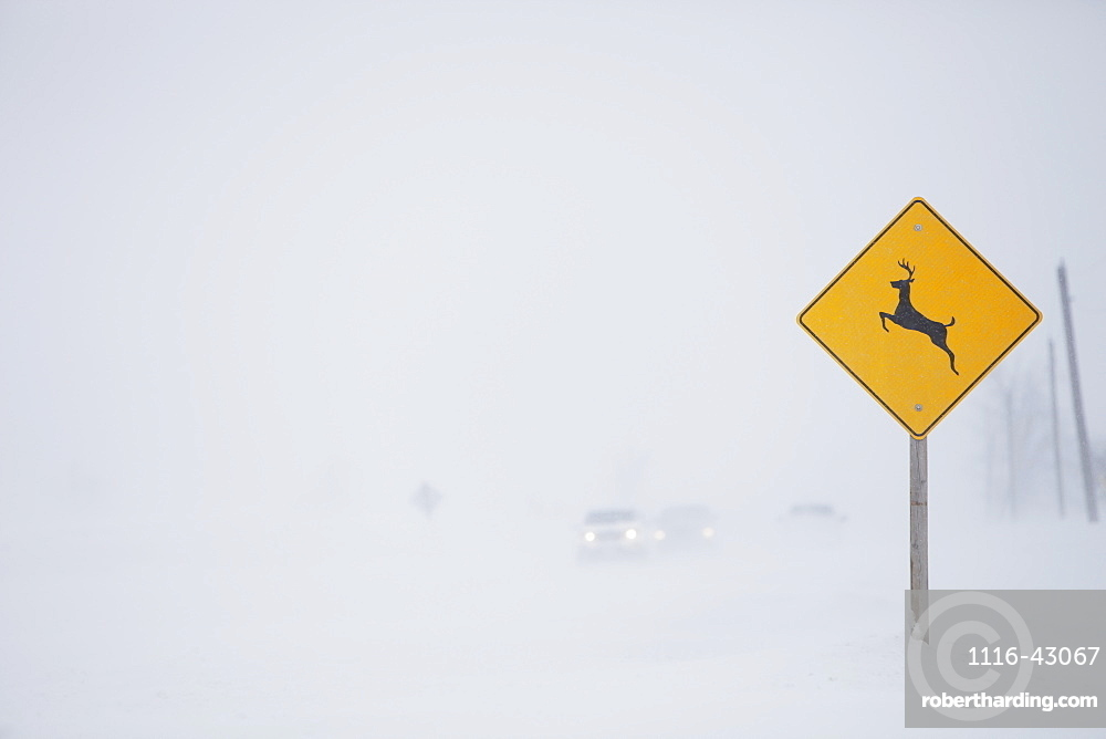 Snow Squall Along Mississauga Road With Deer Crossing Sign, Caledon, Ontario, Canada