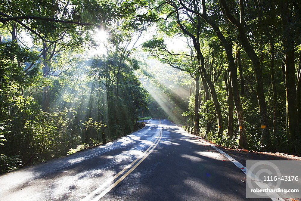 The Road To Hana With Sunlight Shining Through Trees, Maui, Hawaii, United States Of America