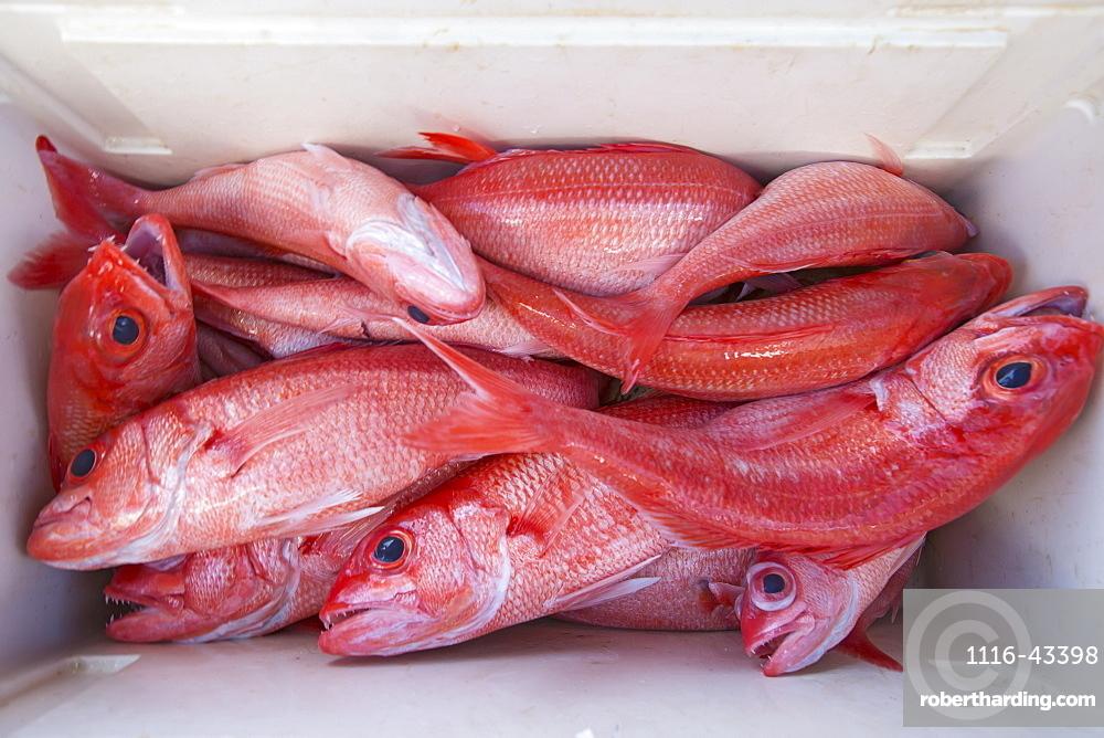 Fresh Caught Pink Fish In A Cooler, Tahiti