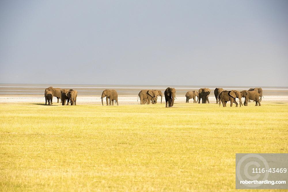 Herd Of Elephants In Lake Manyara National Park, Tanzania