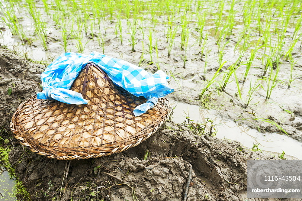 Detail Of The Rice Plants And Traditional Chinese Hat, Scene From A Small Village Near To Wuyuan, Jiangxi Province, China