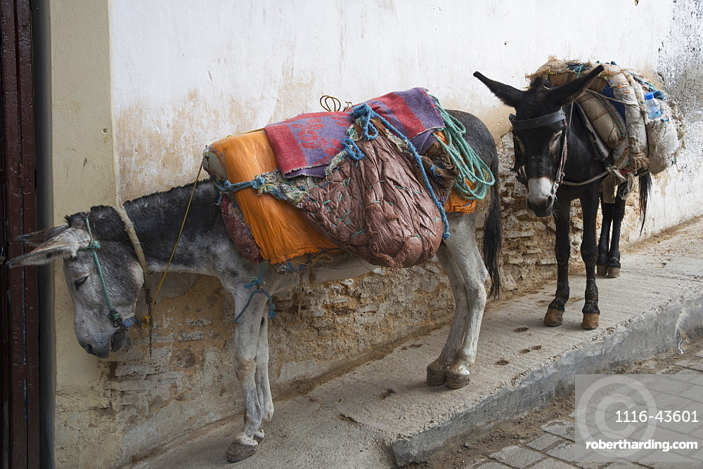 Two Donkeys Tied Up With Relatively Light Backpacks, Fes, Morocco