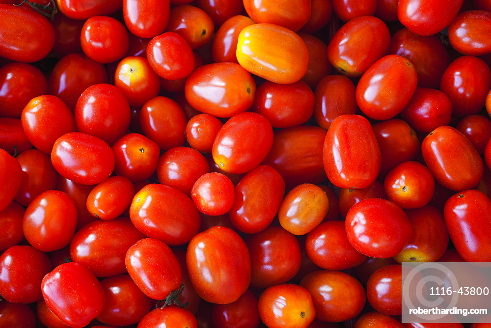 Tomatoes At A Roadside Stand, Dunham, Quebec, Canada