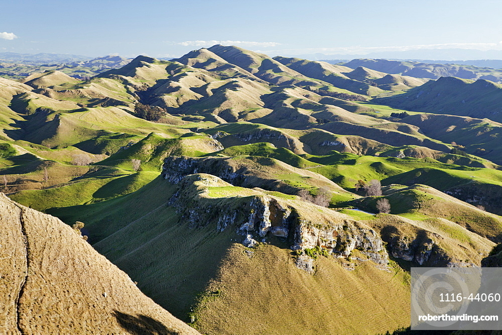 Panorama Of Wavy Mountains And Pastures For Sheep, North Island, New Zealand