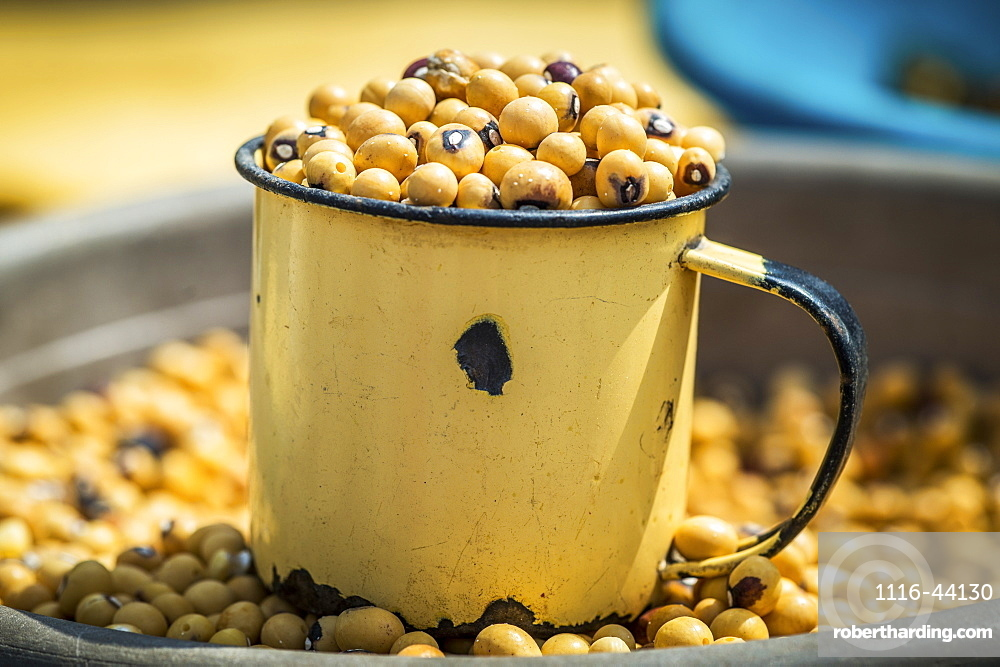 Beans In A Cup And Bowl, Maun, Botswana, Africa