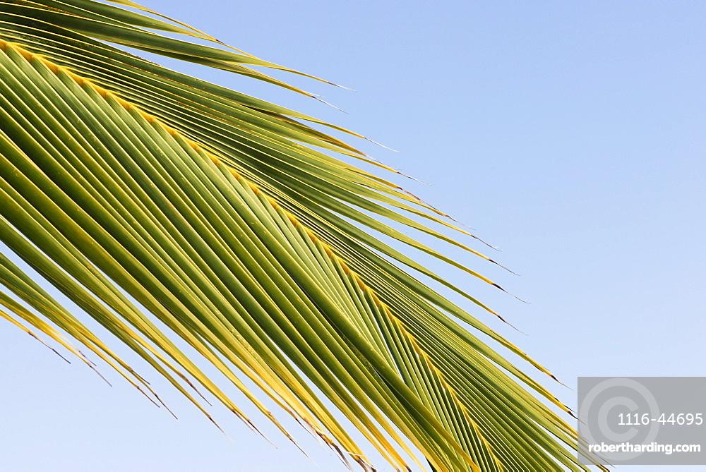 Low Angle View Of A Palm Leaf Against A Blue Sky, Waikaloa, Island Of Hawaii, Hawaii, United States Of America
