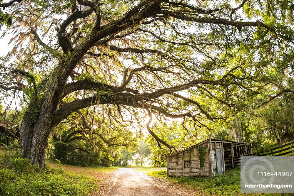 Entrance To A Florida Cattle Ranch, Gaitor, Florida, United States Of America