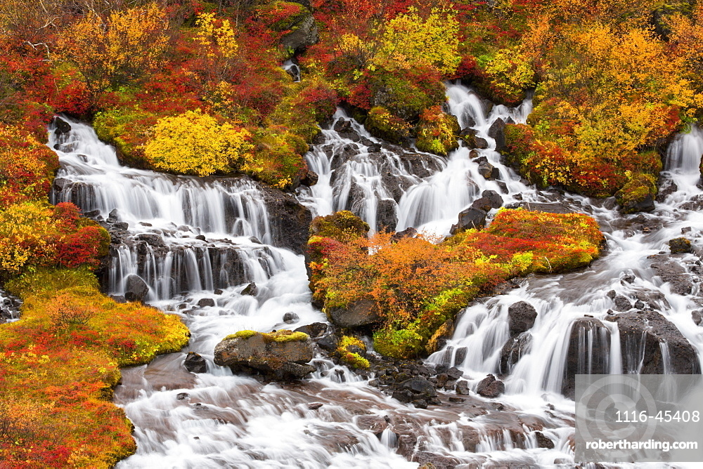 Hraunfossar Waterfalls And Autumn Colours, Iceland