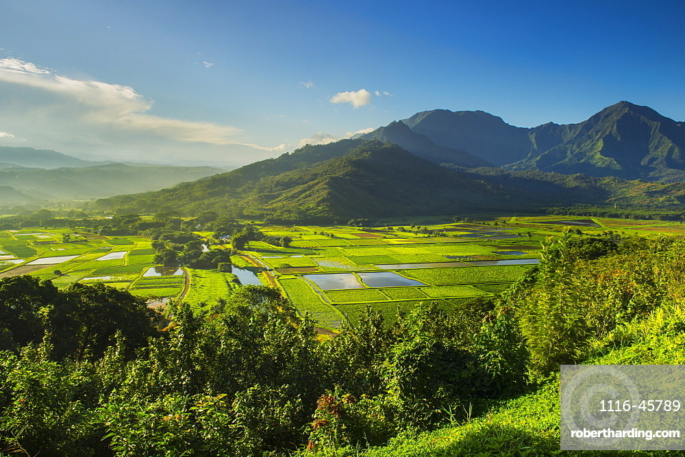 The Hanalei Lookout Provides A View Of Taro Plantations In Kauai, Where Most Of The Taro In Hawaii Is Grown, Kauai, Hawaii, United States Of America