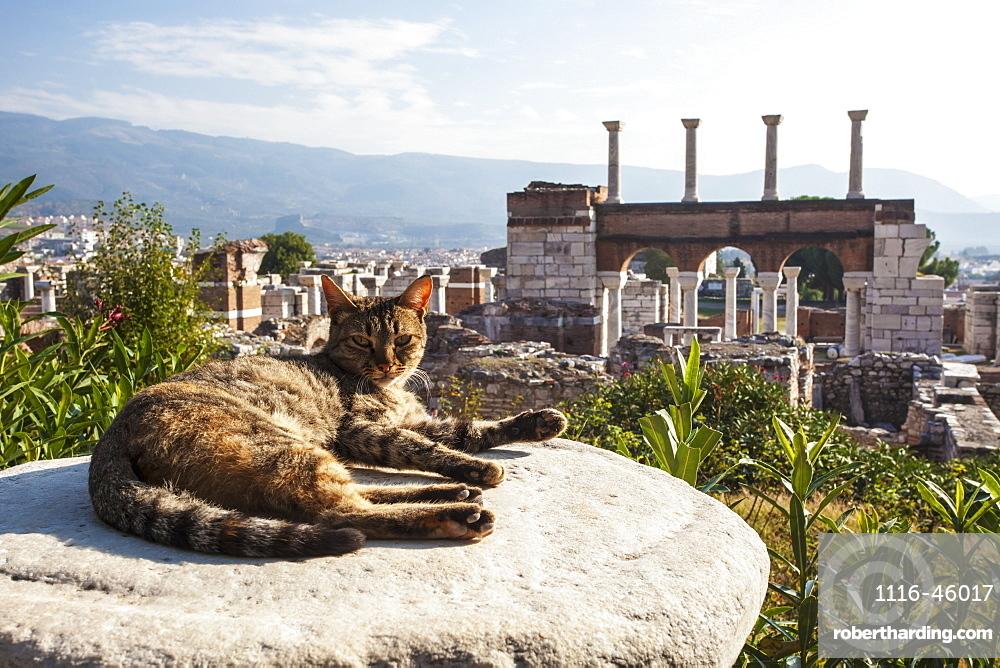 A Cat Lays In The Sun On A Rock At The Ruins Of Saint John's Basilica And The Tomb Of Saint John, Ephesus, Izmir, Turkey