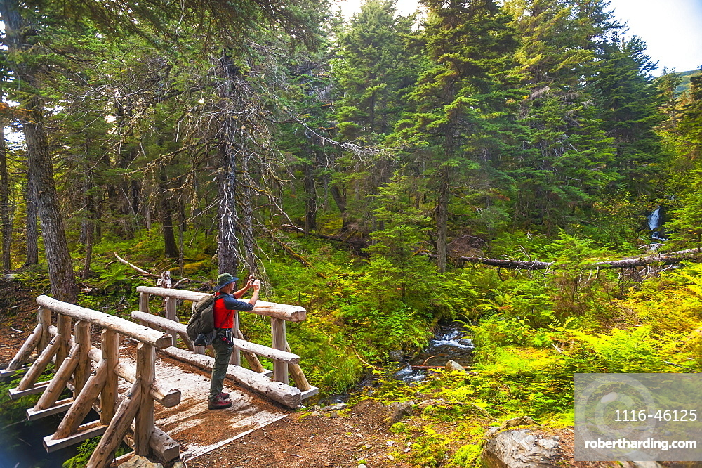 A Man Hiking Across A Log Bridge On The Turnagain Pass Trail In The Chugach National Forest, South-Central Alaska On A Summer Day, Alaska, United States Of America