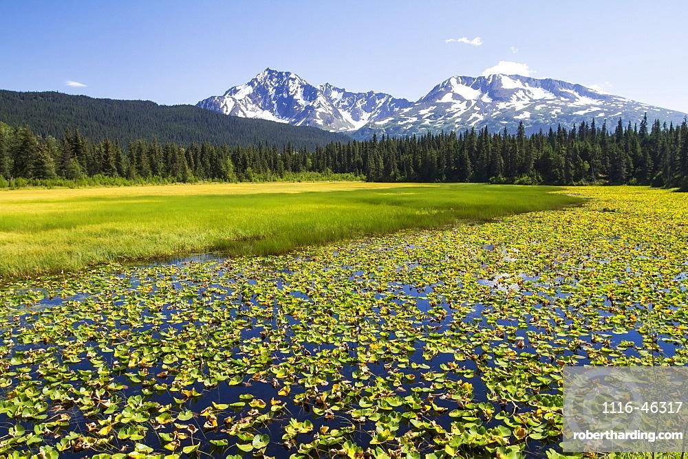 Colourful Lily Padded Marsh Along The Seward Highway, South-Central Alaska, Alaska, United States Of America