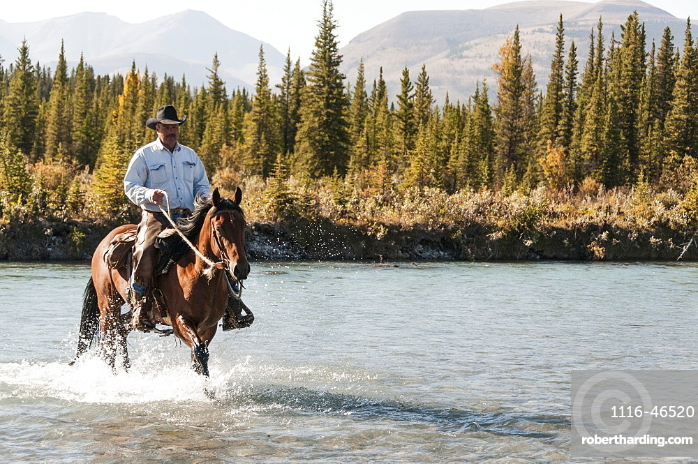 Cowboy And Horse Crossing River, Clearwater County, Alberta, Canada