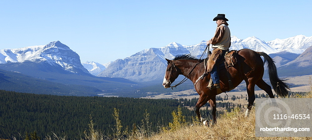Cowboy Riding With A View Of The Rocky Mountains, Ya-Ha-Tinda Ranch, Clearwater County, Alberta, Canada