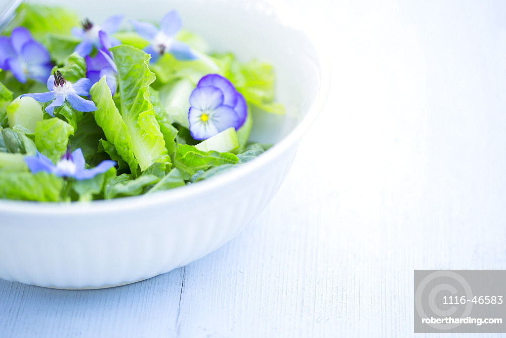 A Gourmet Green Salad With Blue Borage And Purple Pansy Flowers On A Blue Painted Board Background, New Westminster, British Columbia, Canada
