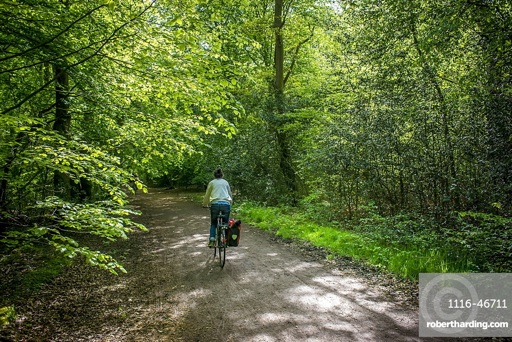 Cycling In Epping Forest, London, England