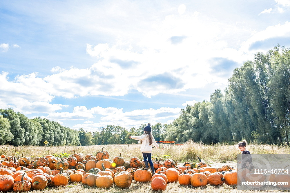 Two Young Girls In A Pumpkin Patch With Blue Sky And Forest Behind, Bright, Ontario, Canada