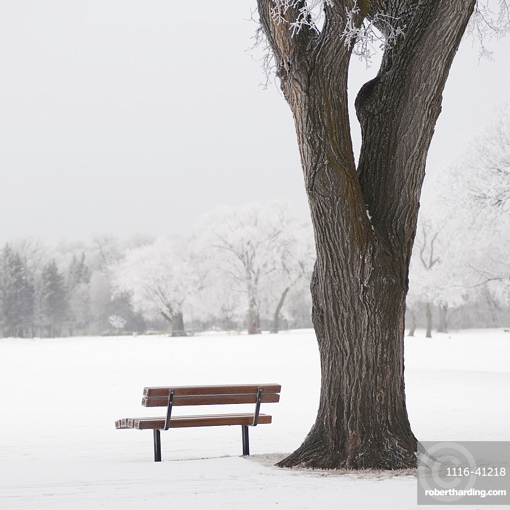 Winnipeg, Manitoba, Canada, A Tree And Park Bench In A Snowy Field In Winter