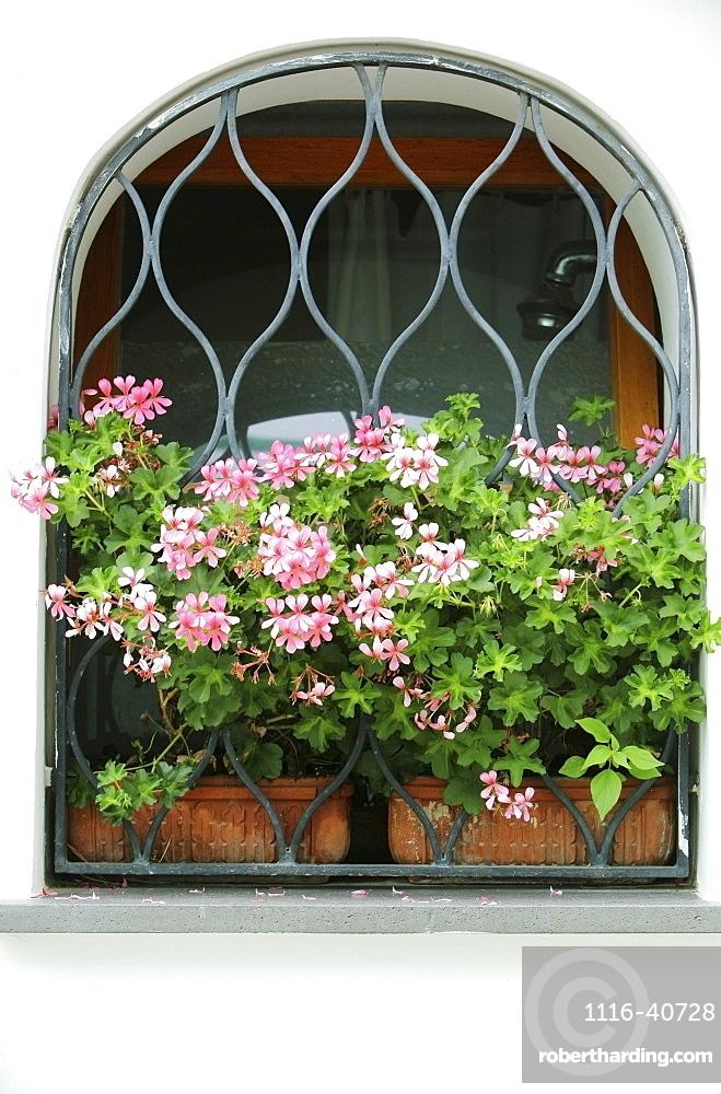 Pink Flowers In A Window