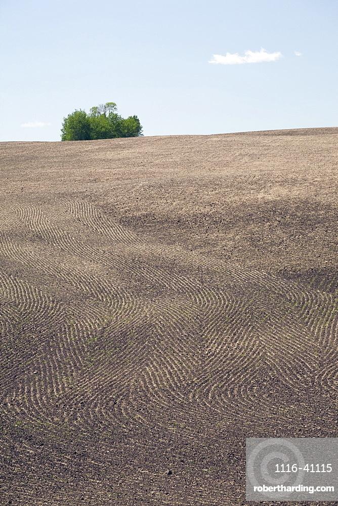 Seeding Patterns In Soil, Central Alberta, Canada