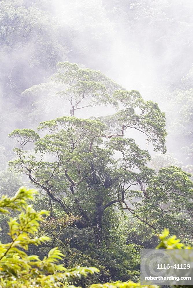 Mist Over A Rainforest, Republic Of Costa Rica
