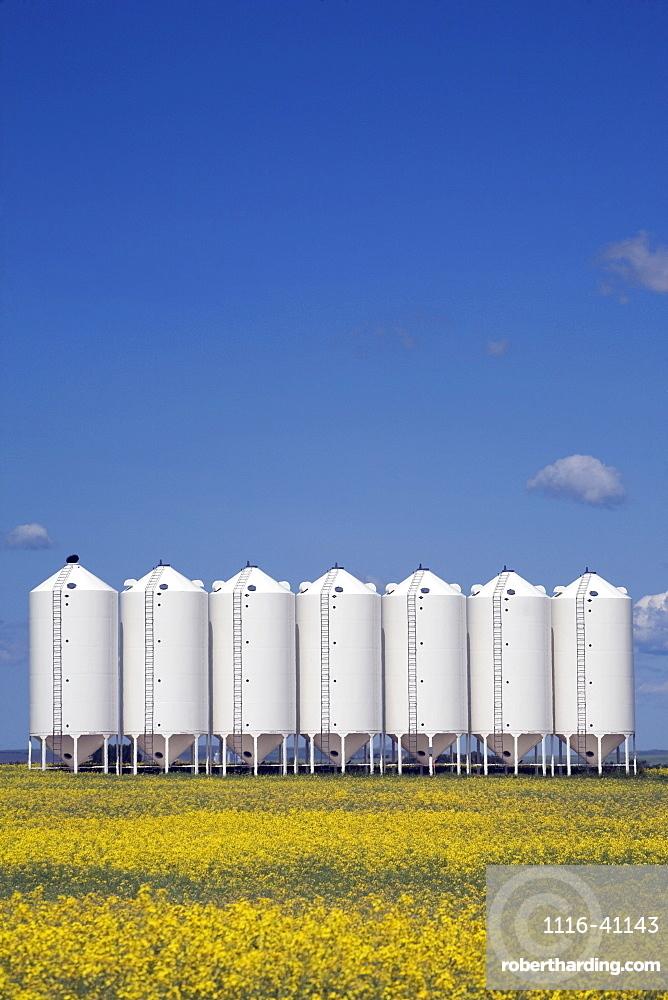 Grain Bins In A Canola Field