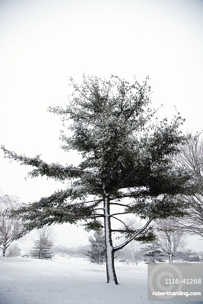 Jordan, Ontario, Canada, Trees In A Park Covered With Snow