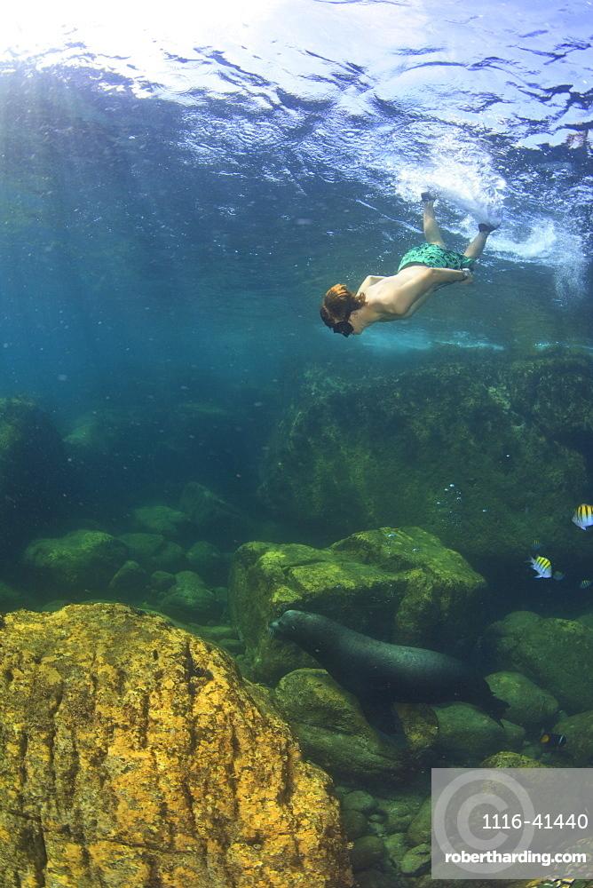 A Tourist Swims Underwater With A Sea Lion At Los Islotes National Marine Park Espiritu Santo Island, La Paz Baja California Mexico