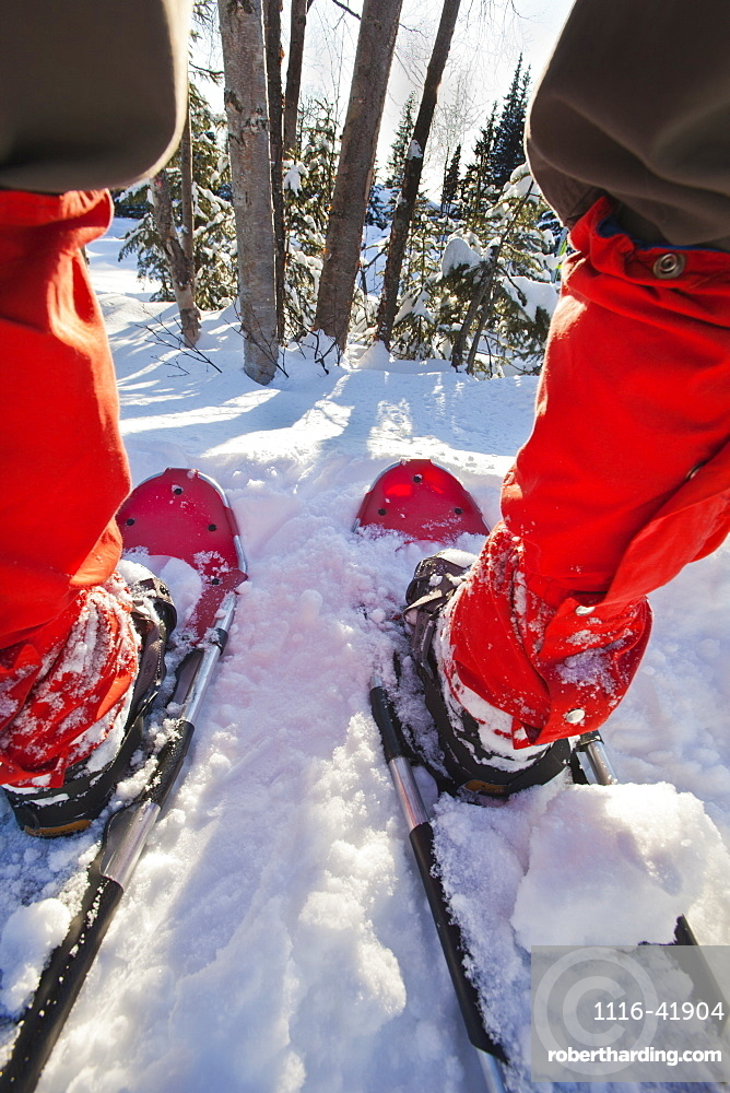 Close-Up Wide Angle Shot Looking Through A Person's Legs From The Back While Wearing Red Gaiters And Red Snowshoes, Anchorage Alaska Usa