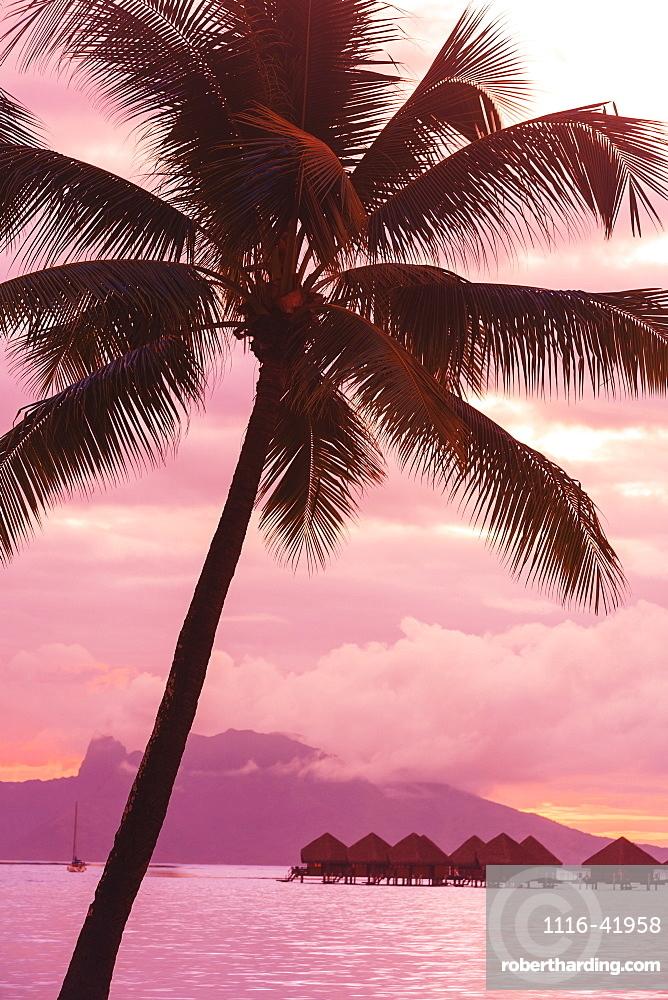 Sunset over moorea from sofitel maeva beach resort near papeete, Tahiti nui society islands french polynesia south pacific