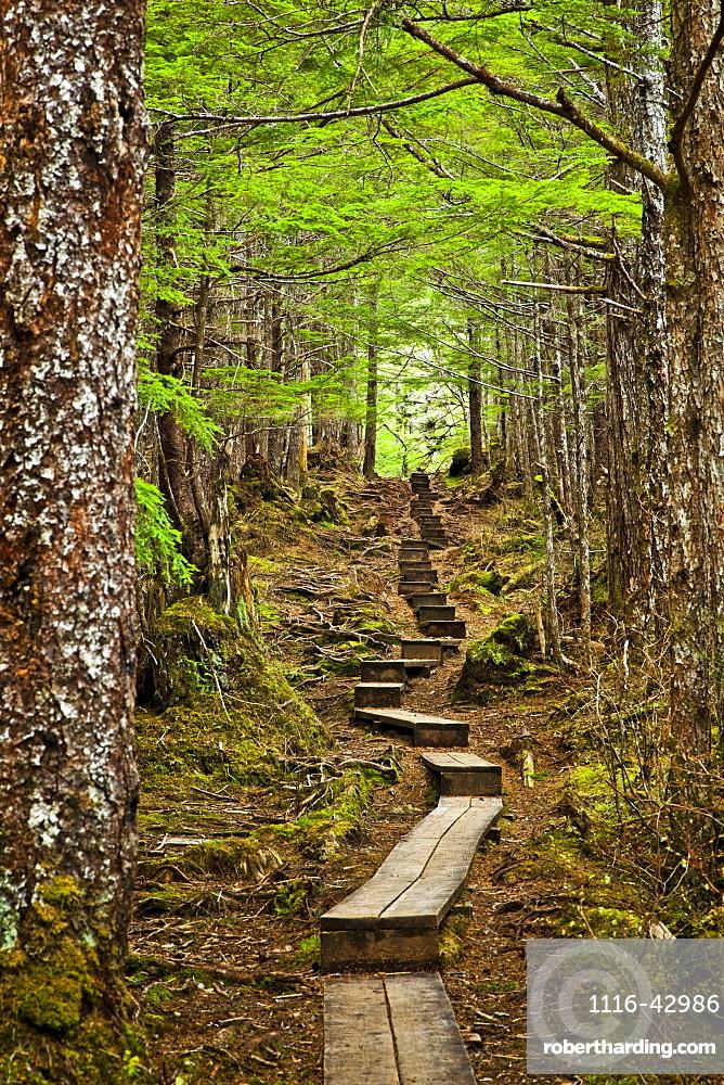 A Boardwalk Through The Mossy Rainforest, Gavan Hill Trail, Sitka, Alaska, United States Of America