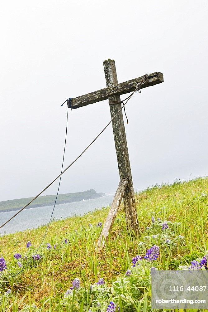 A Weathered Wooden Cross Stands Among Lupine On The Tundra On The Coast Of The Bering Sea, St. Paul Island, Southwestern Alaska, USA, Summer
