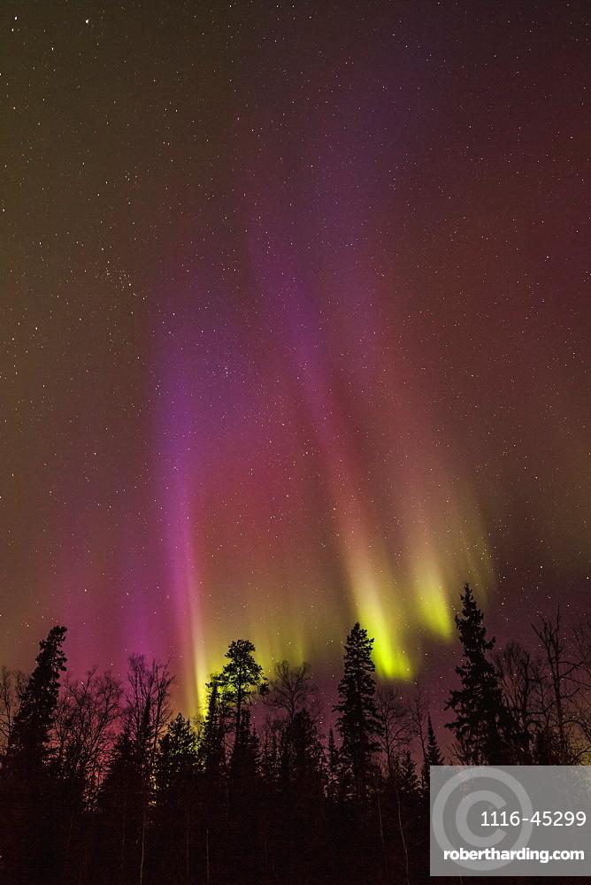 Aurora Borealis Over Trees, Thunder Bay, Ontario, Canada