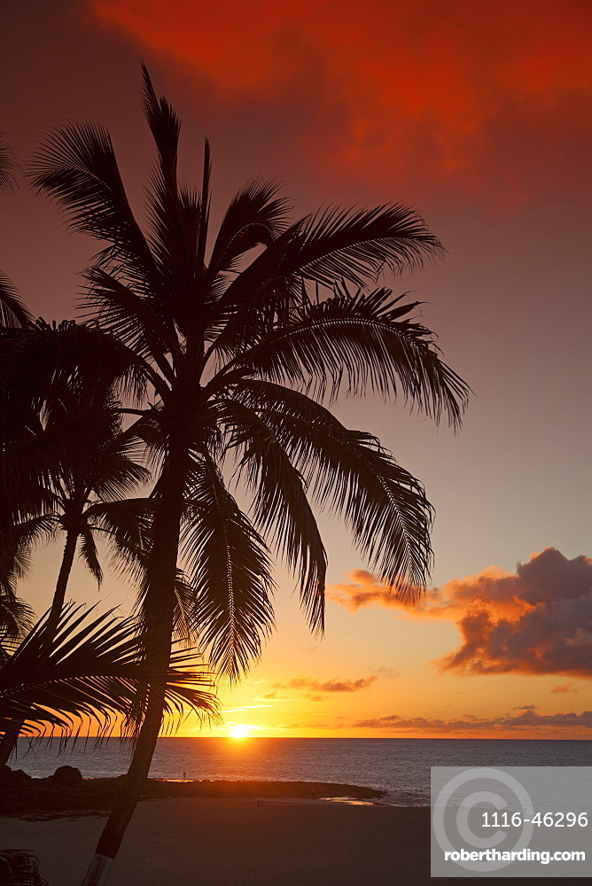 Dramatic Sky At Sunset With A Silhouetted Palm Tree On A Tropical Island, Hawaii, United States Of America