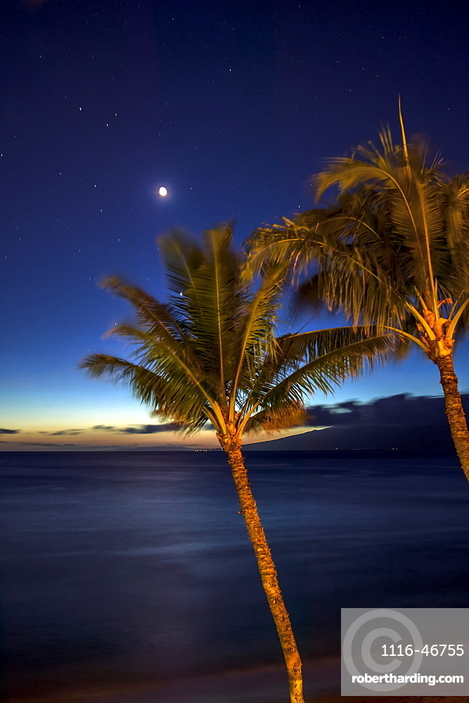 Moon And Stars In The Night Sky With Palm Trees Along The Coast In The Foreground, Maui, Hawaii, United States Of America