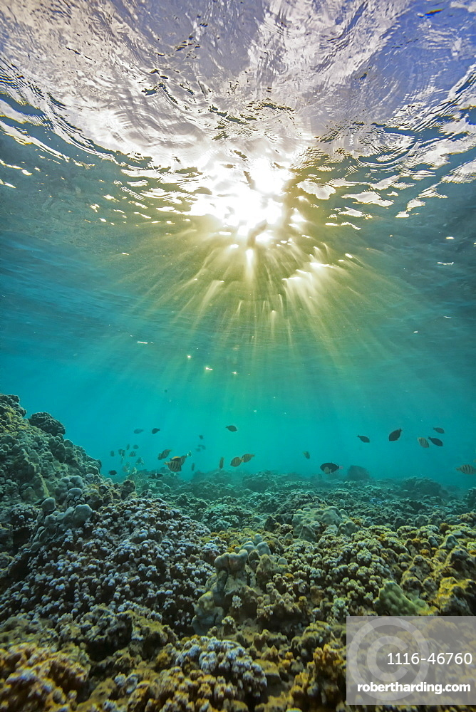 An Underwater View Of Fish And Coral With Sunlight Shining Through The Surface Of The Water, Hawaii, United States Of America