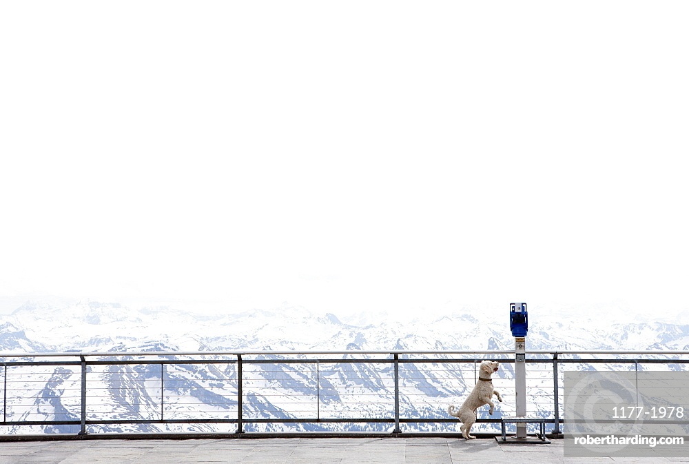 Dog jumping up to coin operated binoculars overlooking snowy mountain view, Wiendorf, Mecklenburg-Vo