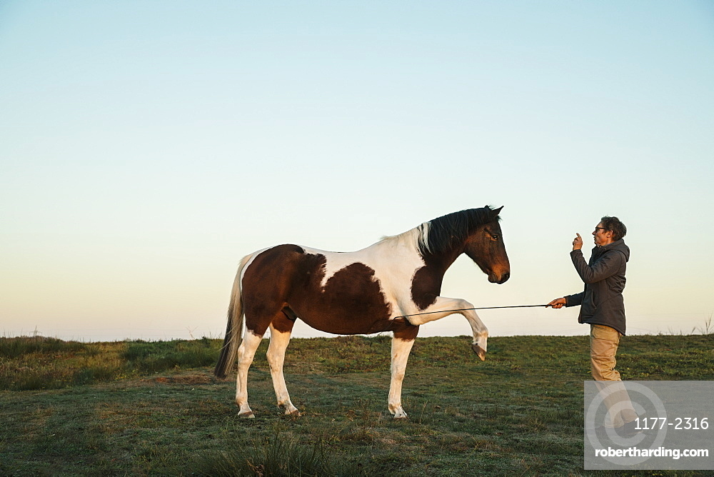 Woman training brown and white horse in rural field