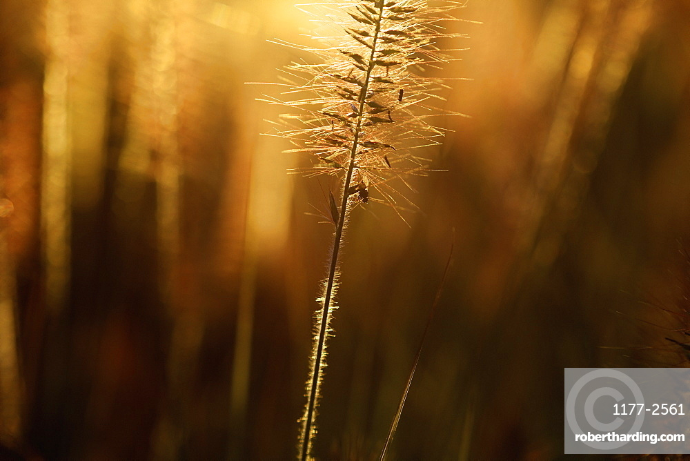 Close up meadow at sunset
