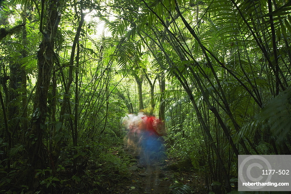 Blurred motion of people walking in forest