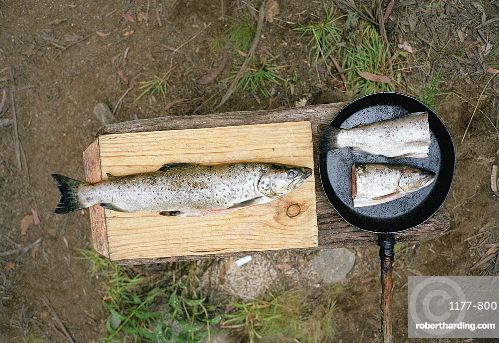 One dead fish in a frying pan and one on a wood block