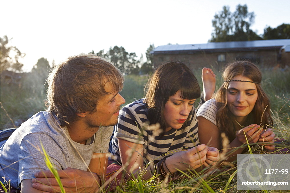 Three friends lying down amongst the timothy grass