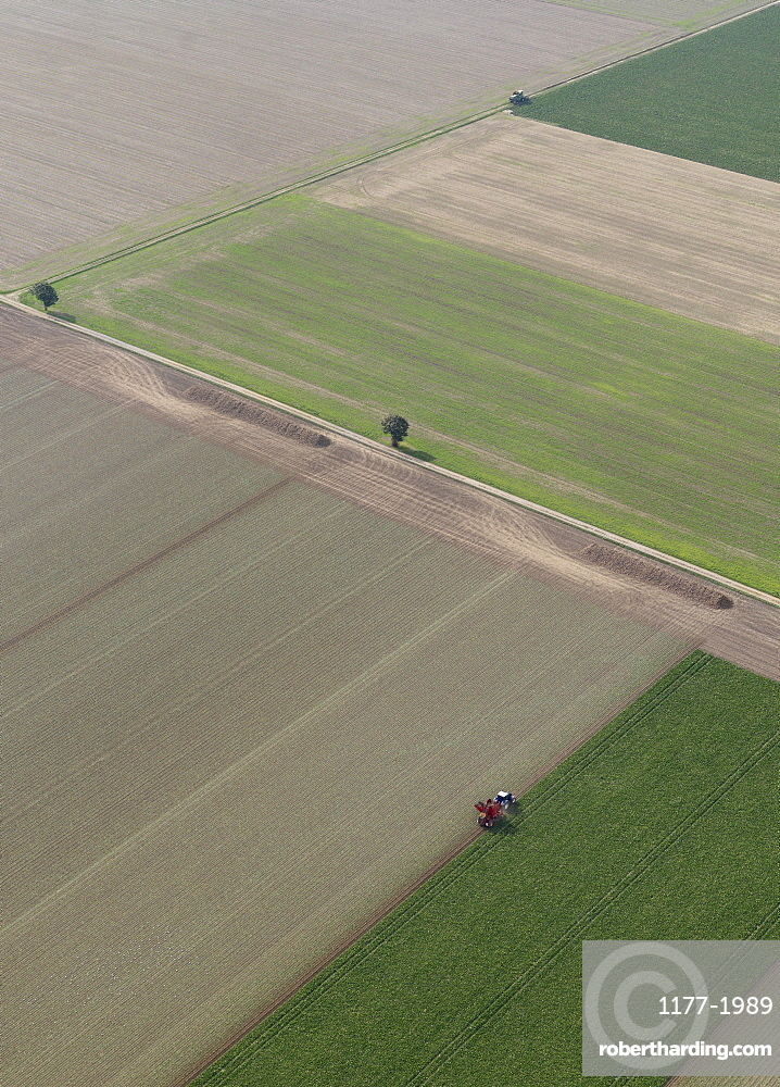 Aerial view tractor in sunny agricultural crop, Hohenheim, Baden-Wuerttemberg, Germany